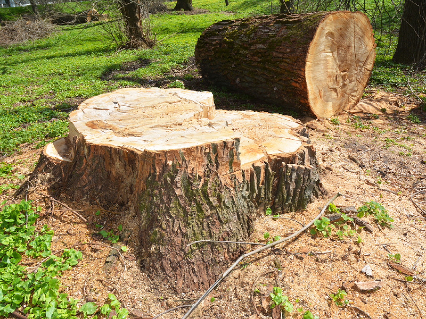 Safe and effective stump grinding