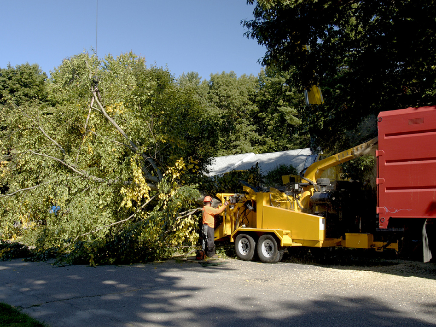 Why choose Darby's Tree Service?